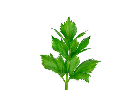 Celery sprig close-up isolated on white background Stock fotó