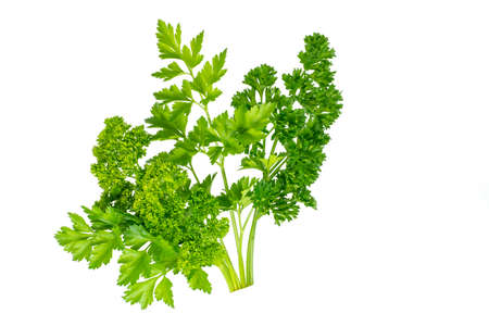 Parsley is a beautiful bunch of different varieties of green parsley isolated on a white background. A fragrant vitamin seasoning for nutrition. Healthy food concept