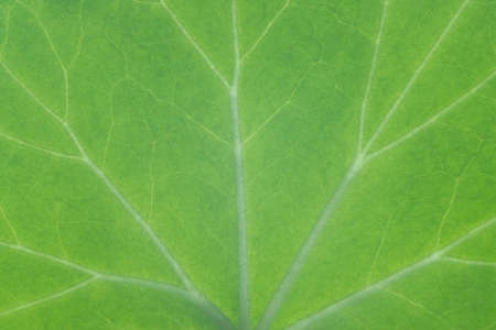 Green leaf texture close up, background and for design Stock fotó