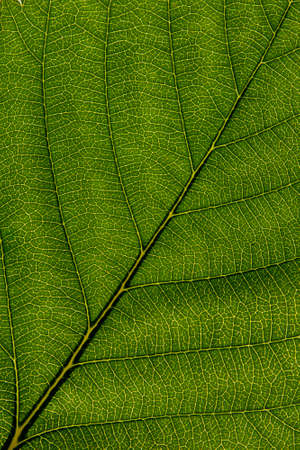 Bright green leaf texture close up, beautiful background for design Stock fotó
