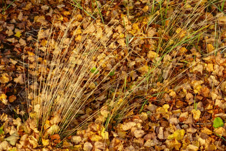 Beautiful autumn background of fallen leaves, bright colorful landscape