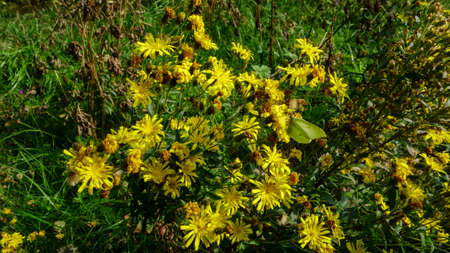 Yellow wildflowers with bright green butterfly, beautiful natural landscape