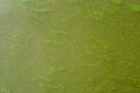 Green water algae bloom, background for design