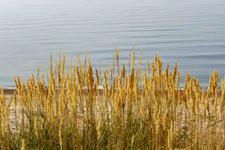 Reed by the lake, beautiful natural landscape for relaxation and recreation