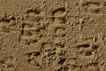 Roe deer footprints in the sand, wildlife background