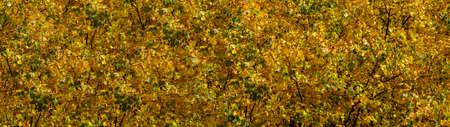 Golden autumn foliage on tree beautiful textured background for design Stock fotó