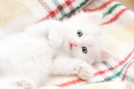 Portrait of little white cat at rug Stock Photo - 5998069