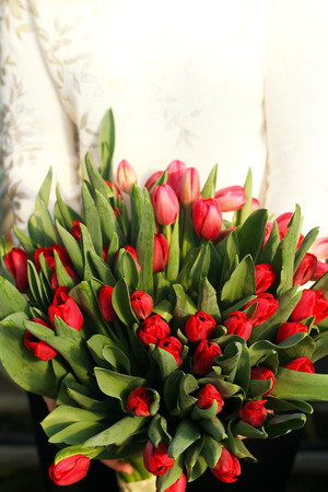 Bouquet of tulips in the hands of the girl.Bouquet of red tulips. Spring gift for a girl . Stock Photo