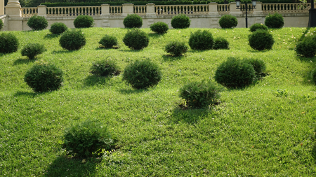 round bushes. green lawn with bushes, landscape design 版權商用圖片
