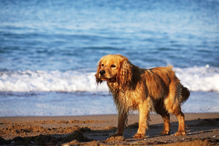 Portrait of a young dog on a sandy beach, against the sky and sea waves. Imagens