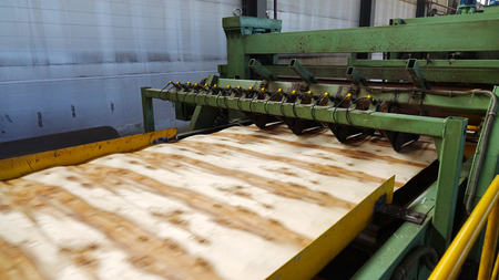 Shop for the production of plywood. Processing of business wood. Woodworking industry