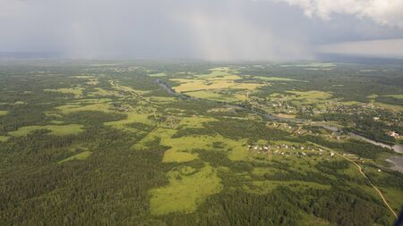 Pine forests from a birds eye view. Ecology of the planet.