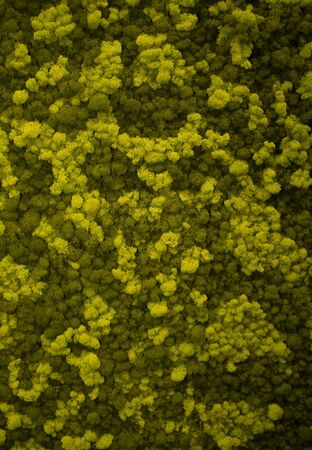 Moss wall, green wall decoration made of natural moss. Green background.