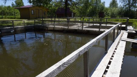 Fish farm in the pond. Aquaculture in the open air