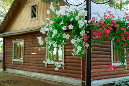 Petunia flowers in pots. Flower pot hanging on the background of a wooden house. Stockfoto