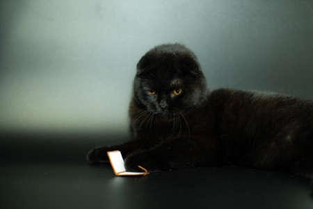 Beautiful black cat reading a book lying on a dark background. Archivio Fotografico