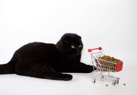 A black cat with yellow eyes sits with a shopping basket filled with cat food.