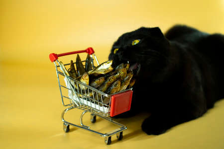 Black cat with a shopping basket filled with fish. Zdjęcie Seryjne - 161950562