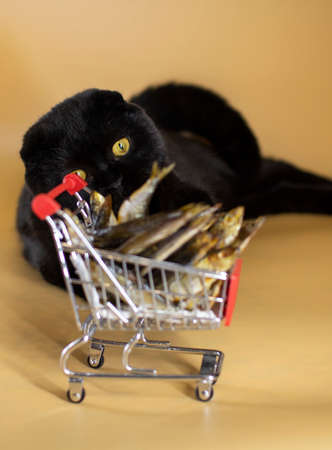 Black cat with a shopping basket filled with fish.
