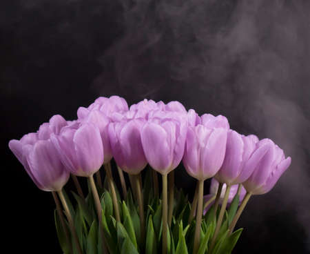 A bouquet of purple tulips on a black background.