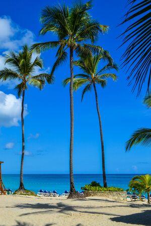 dominican republic: Travel in Dominican Republic. beautiful carribean beaches