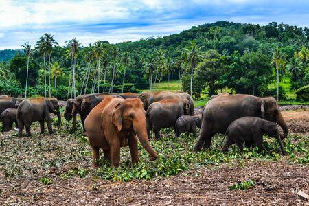 ceylon: Travel in Sri Lanka. Wildlife on Ceylon
