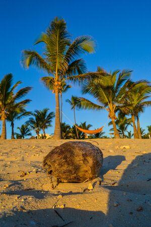 dominican republic: Travel in Dominican Republic. Coconut on sandy beach