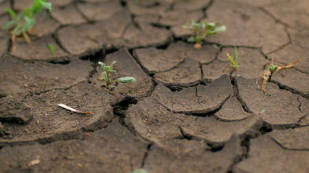 small green plants are growing through cracked ground 스톡 콘텐츠
