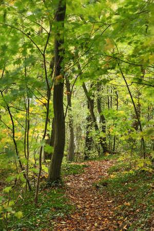 belgien: Landscape  in Dinant  Belgique