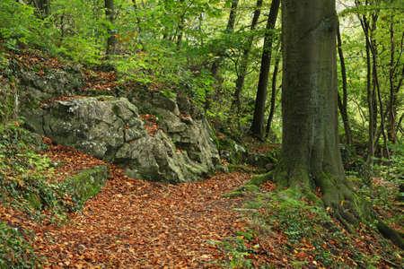 belgien: Landscape  in Dinant. Belgique