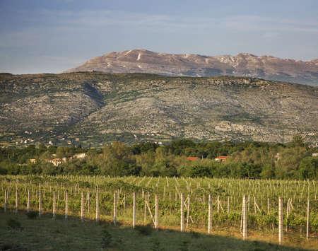 herzegovina: Bacevici. Bosnia and Herzegovina