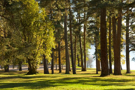 paysage: Forest in. Finland