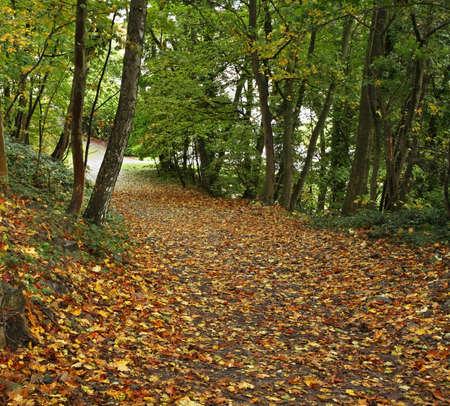 paysage: Namur park. Belgium