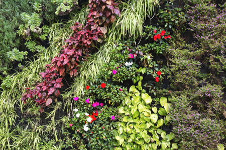 santa cruz de tenerife: Flowerbed in Santa Cruz de Tenerife. Canary Islands. Spain