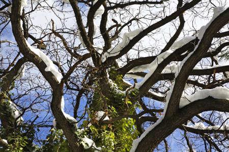 andorra: Tree in Andorra la Vella. Andorra