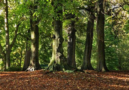 bruges: Park in Bruges. Flanders. Belgium