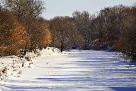 riverside tree: Klyazma river in Shchyolkovo. Russia