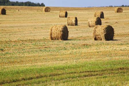 belarus: Landscape near Petkovichi village. Belarus