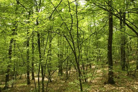paysage: Forest near Belogradchik. Bulgaria
