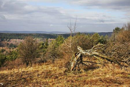 paysage: Landscape in Arlamow. Poland