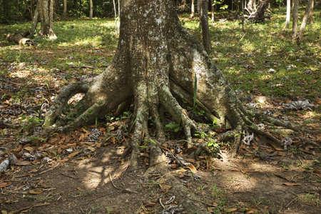 el: Natural Park El Cubano. Cuba