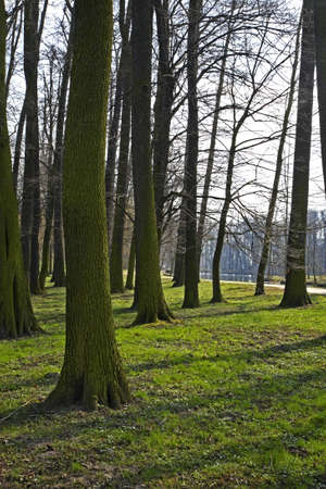 paysage: Arkadia park in Lowicz county. Poland