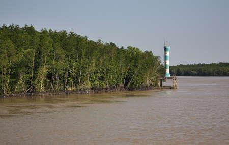riverside tree: View of Saigon river. Vietnam