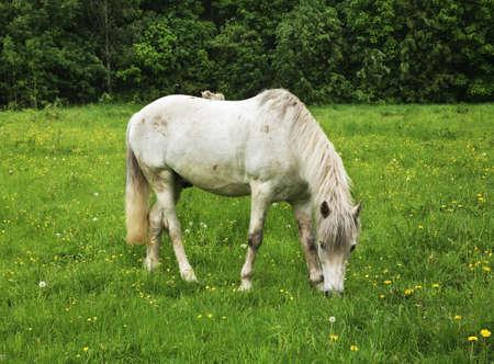 homestead: Horse in Sukhanovo homestead. Moscow region. Russia