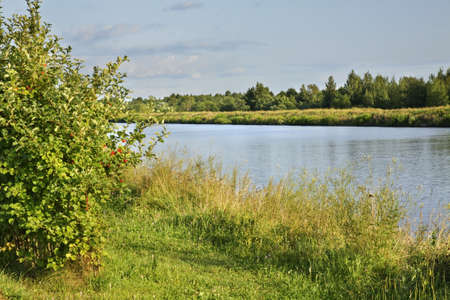 riverside tree: View of Moscow Canal. Russia Stock Photo