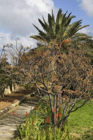 botanic: Argotti Botanic Gardens in Floriana. Malta