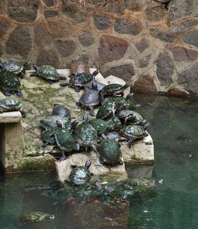 Pond in Jade Emperor Pagoda - Chua Ngoc Hoang. Ho Chi Minh. Vietnam