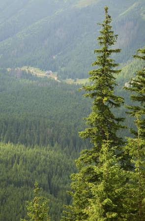 tatras tatry: View of Tatra Mountains near Zakopane. Poland
