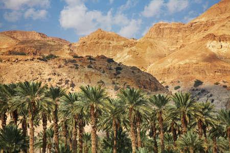 Mountain near Ein Gedi. Israel