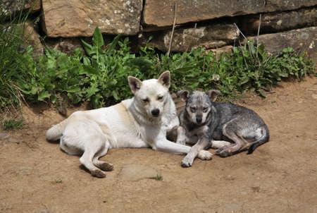 Dogs in Gelendzhik. Russia Stok Fotoğraf